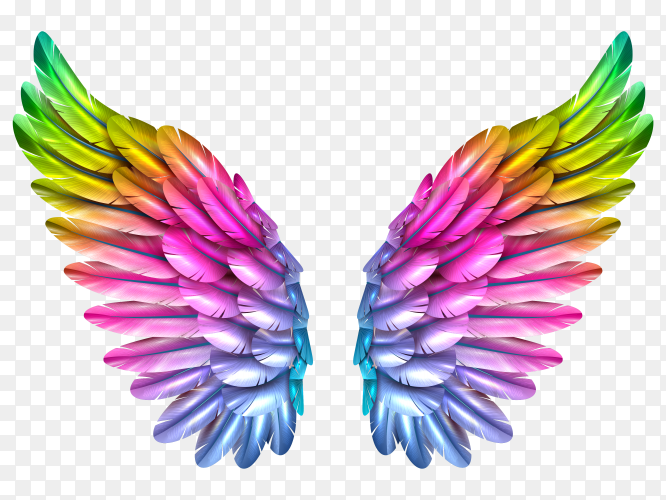 Color wing transparent PNG