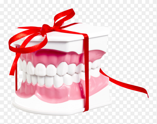 Artificial human jaw with white teeth transparent PNG