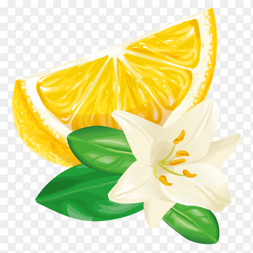 Vector lemon slice free download PNG