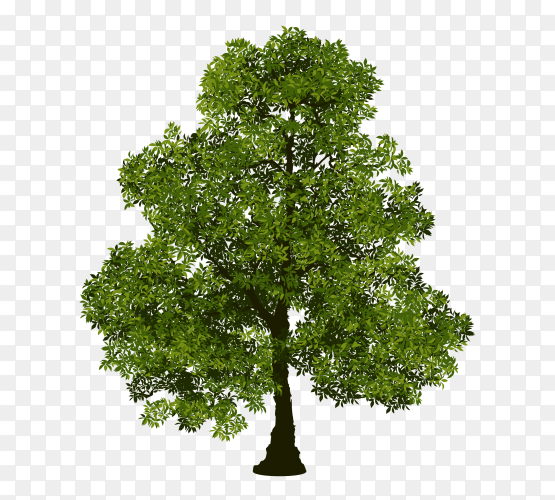 Beautiful green tree with leaves vector PNG