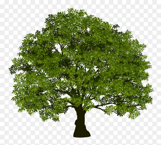 Beautiful tree realistic on transparent PNG