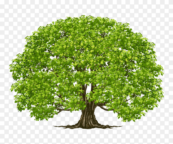 Big beautiful tree  on transparent PNG