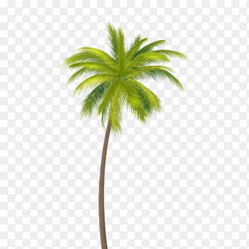 Coconut Tree  vector PNG