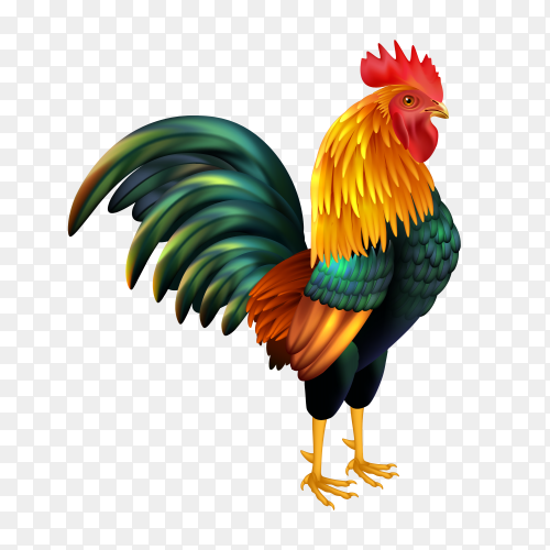 Colorful rooster on transparent PNG