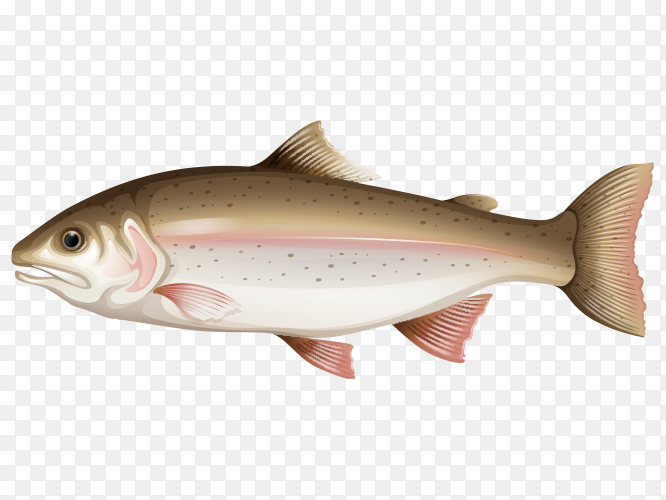Delicious fish vector PNG