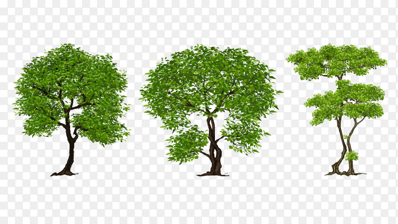 Different trees on transparent background PNG