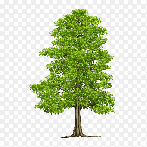 Drawn tree on transparent background PNG