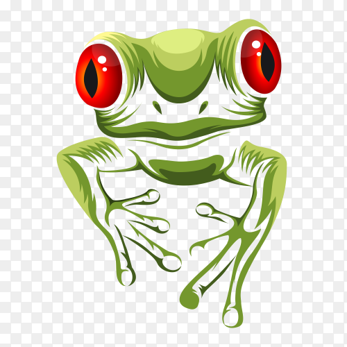 Green frog on transparent background PNG