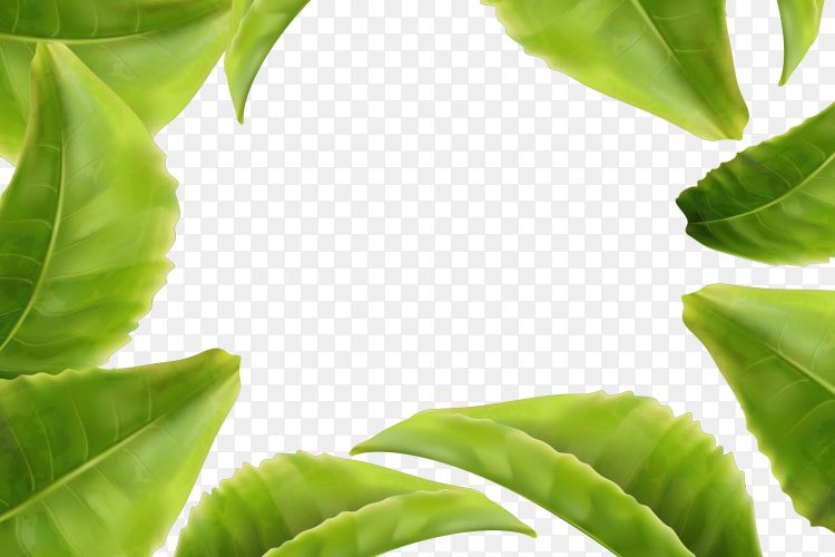 Green leaves frame abstract on transparent background PNG