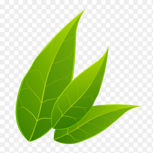 Green leaves on transparent PNG