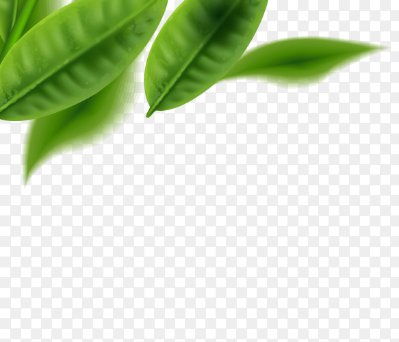 Green leaves on transparent background PNG