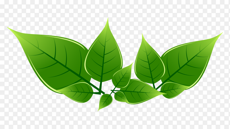 Green leaves premuim vector PNG