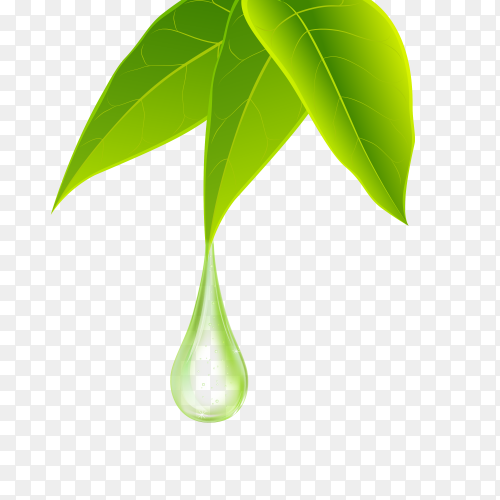 Green leaves with dewdrop on transparent PNG