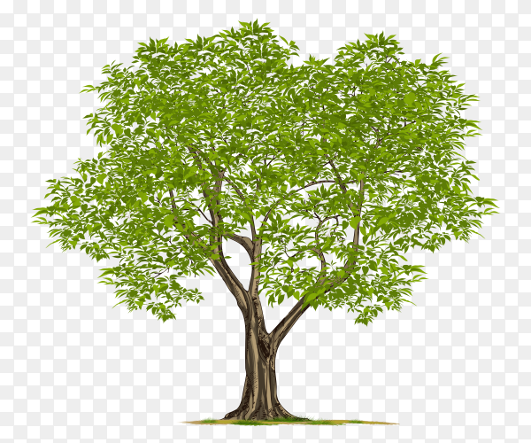 Green tree with leaves on transparent background PNG