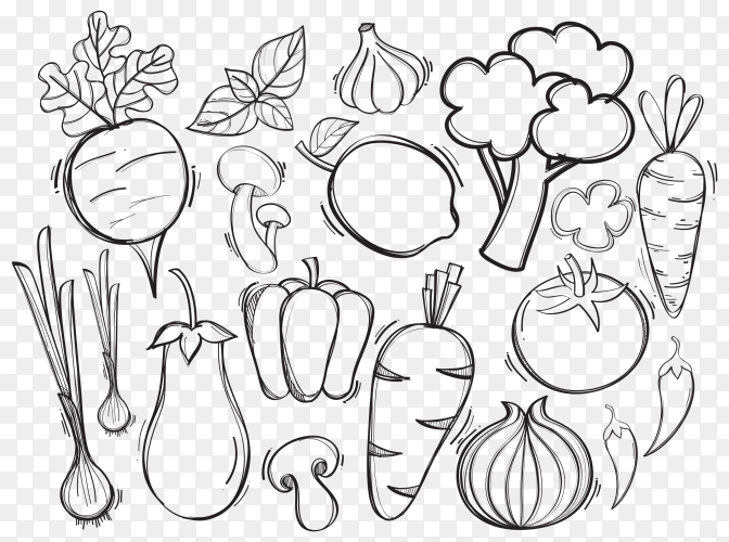 Hand drawn illustration organic vegetables on transparent PNG