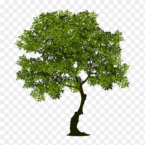 Leaned Tree with green leaves on transparent background PNG