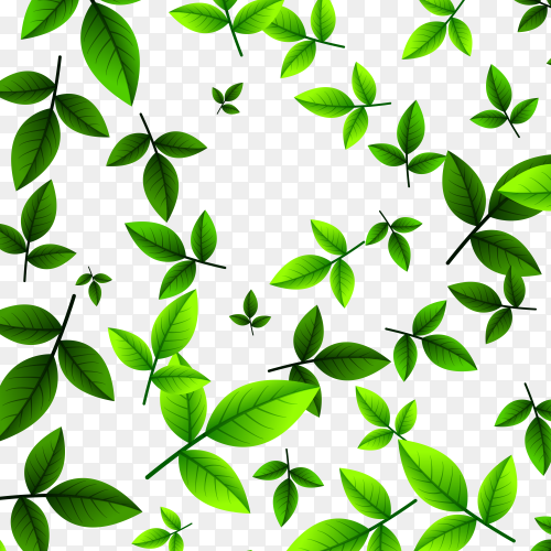 Leaves green tea on transparent PNG