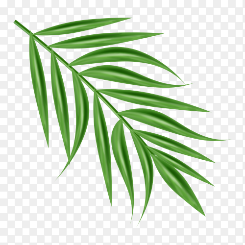 Long green leaves on transparent PNG