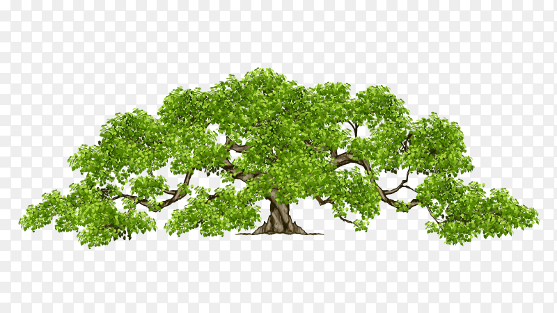 Old tree realistic leaves vector PNG