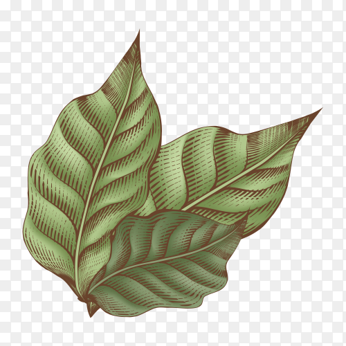 Pale leaves on transparent PNG