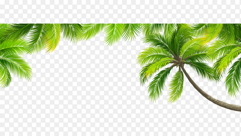 Palm tree leaves vector PNG