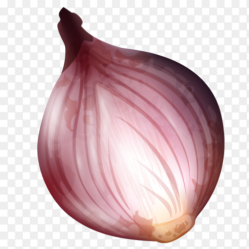 Red Onion vector PNG