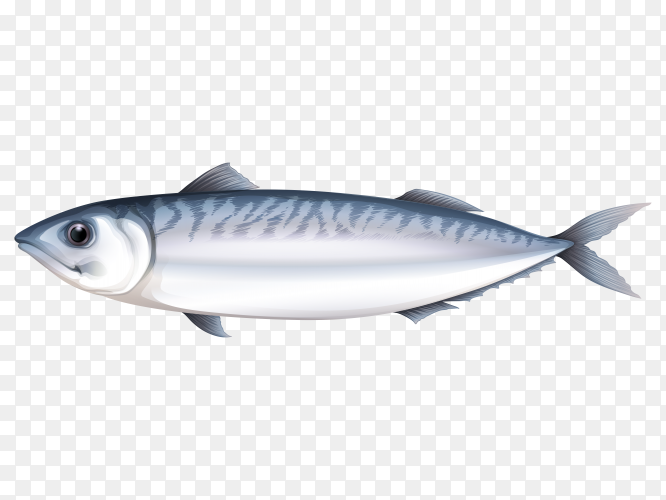 Salmon fish on transparent background PNG