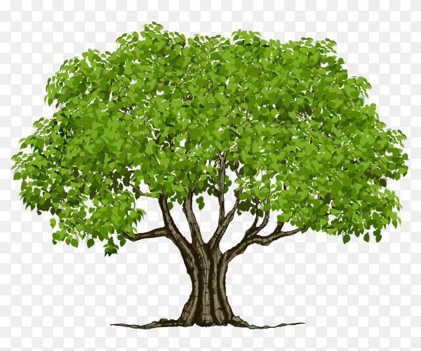 Summer green tree vector PNG