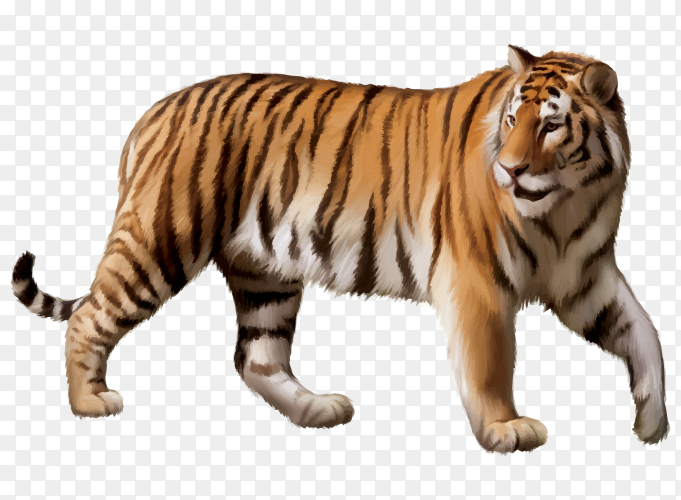 Tiger Cartoon on transparent background PNG