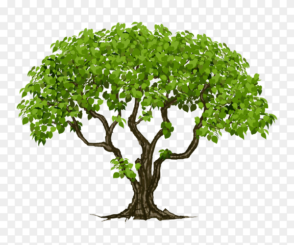 Tree with many branches and green leaves vector PNG