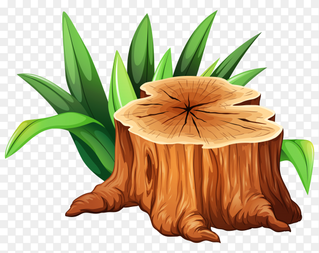 Tree Stump on transparent PNG