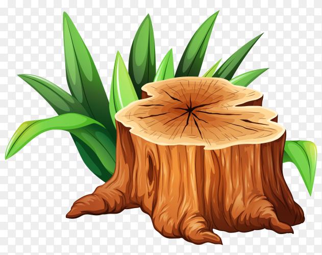 Tree Stump on transparent PNG