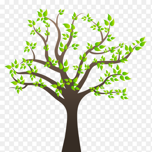 Tree with branches on transparent PNG