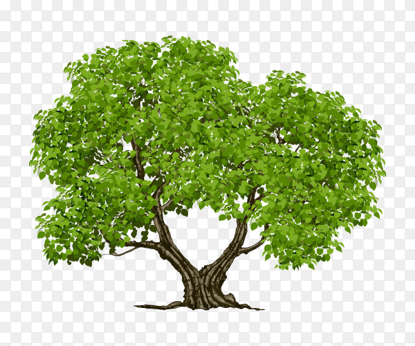 Two branches tree on Transparent background PNG