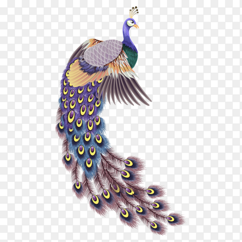 Beautiful hand drawn peacock on transparent PNG