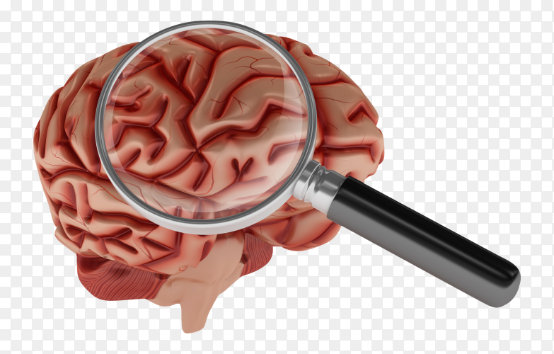 3D cartoon human brain with loupe on transparent background PNG