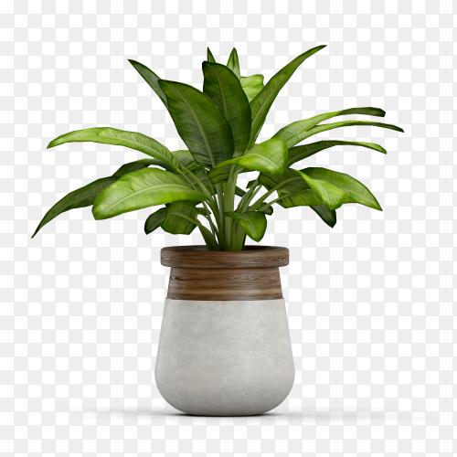 3D plant on pot Premium vector PNG