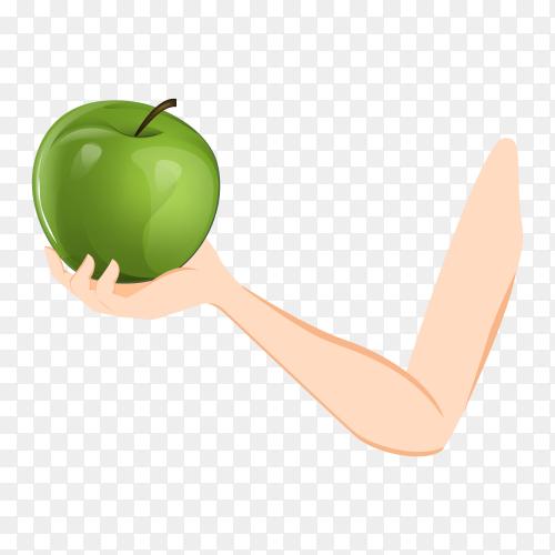 A hande holding green apple on transparent background PNG