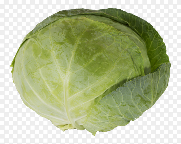 A large green cabbage on transparent background PNG