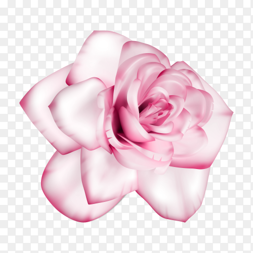 Beautiful Pink flower Clipart PNG