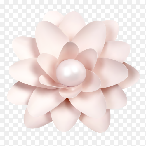 Beautiful flowe on transparent background PNG
