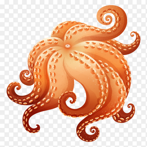 Brown Octopus on transparent background PNG