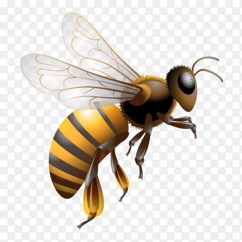 Cartoon bee isolated on transparent background PNG