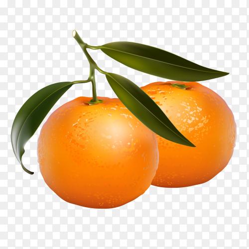 Fresh Oranges fruits vector PNG