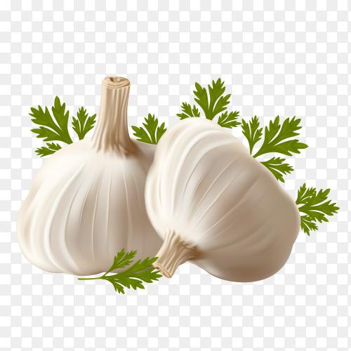 Fresh garlic on transparent background PNG