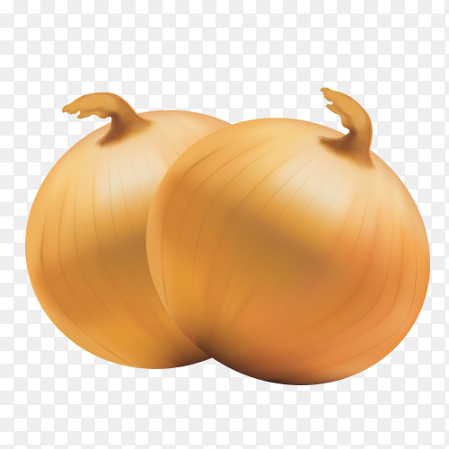 Fresh onion bulb isolated on transarent PNG