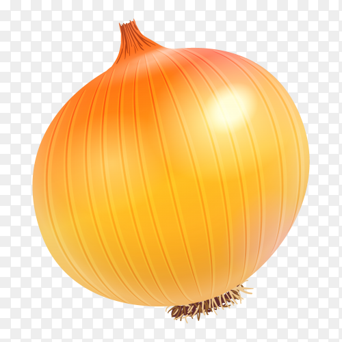 Fresh onion on transparent background PNG