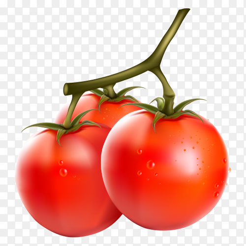 Fresh red tomatos on transparent background PNG