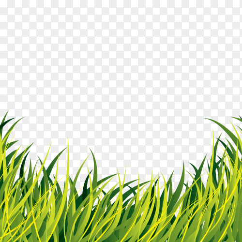Fresh spring green grass on transparent PNG