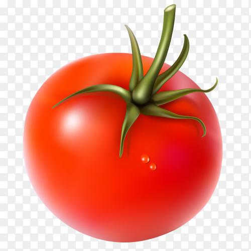 Fresh tomato Premium vector PNG